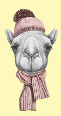 Portrait of Camel with hat and scarf. Hand drawn illustration.