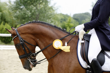 Award winner dressage horse canter with her proud rider outdoors