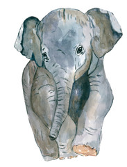the elephant . Watercolor drawing made by hand. For design and printing.