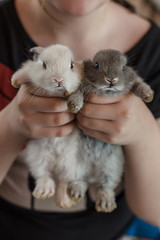Two little adorable bunny rabbit