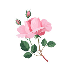 Rose Hand Drawn Realistic Illustration