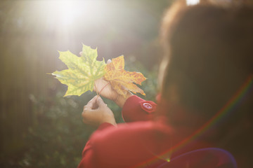 Womans hands holding up two autumn leaves in sunlit park