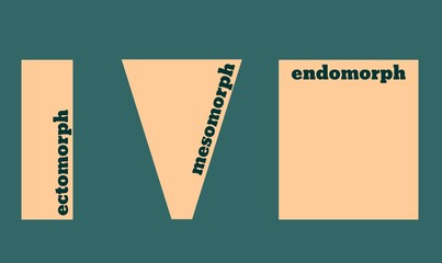 Body types: Ectomorph, Mesomorph and Endomorph. Vector illustration.