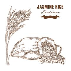 Thai jasmine rice in sack. Rice plant hand drawn. Vector