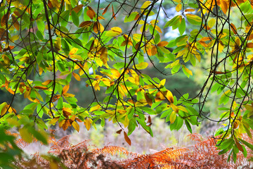 Green and yellow leaves on tree branches hanging over brown ferns