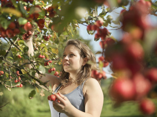 Young woman picking fruit from tree in orchard