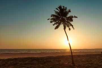 Lonely palm tree at sunset on the beach of GOA in India