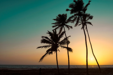 Palm trees at sunset on GOA Beach. India. Vintage processed. Fashion travel and tropical beach concept.
