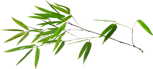 illustration with lush green bamboo branch