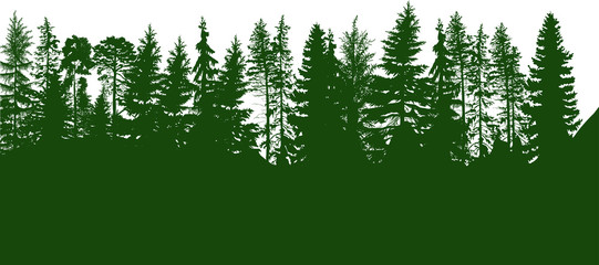 green coniferous forest isolated on white