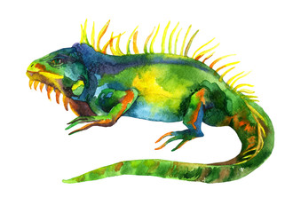watercolor iguana