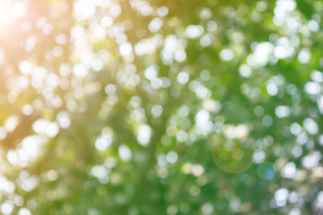 Fresh soft nature colour bokeh bush tree and sunlight for abstract background