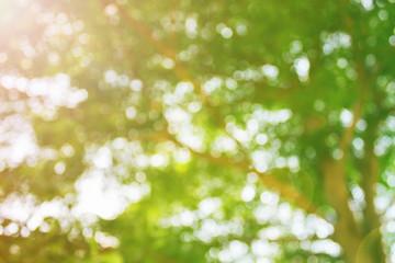 Fresh soft green colour bokeh bush tree and sunlight