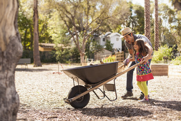 Mid adult man and daughter in community garden pushing wheelbarrow
