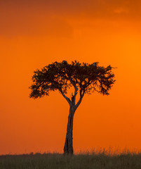 Wall Mural - Sunset in the Maasai Mara National Park. Africa. Kenya