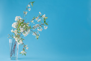 spring bouquet of flowers on the  mint blue background