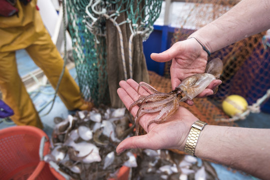 Scientists inspecting catch of fish on research ship