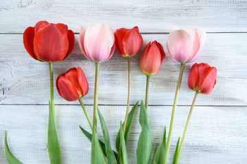 Row of tulips on wooden background
