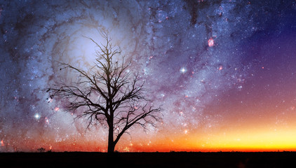 Lonely tree silhouette in alien world with bright galaxy vortex in the sky. Elements of this image are furnished by NASA