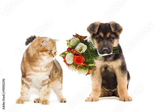 alley cat cat food
