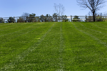 Freshly cut grass at the empty park in springtime