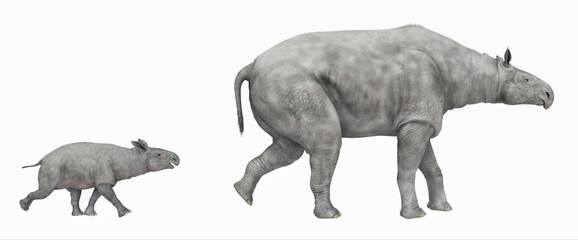 Paraceratherium isolated on white background