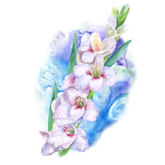 Watercolor drawing of spring gladiolus flowers. Hand drawn painting of beautiful sword lily plant. Spring flowers bouquet. Gladiolus communis. White pink lily bloom. Greeting card design. Add any text