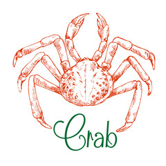 Sketch of large japanese snow crab
