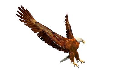 Eagle landing, bird of prey isolated on white background