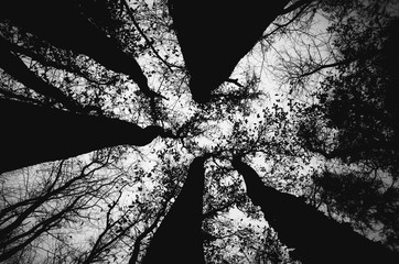 Tree tops in the sky shot in black and white