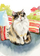 watercolor illustration of cat