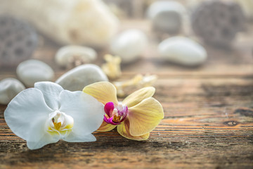 Orchids bloom