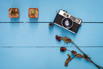 cactus,dry rose and old camera on blue wooden table