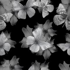 flowers black-white seamless