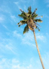 Coconut tree with bright sky background.