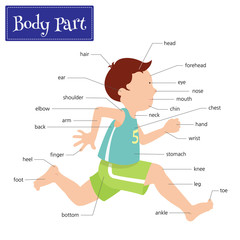 Name of body parts that can be seen externally. Captions on a boy