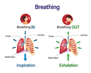 Pictures that show what happens to the lungs when you breath inhale and exhale