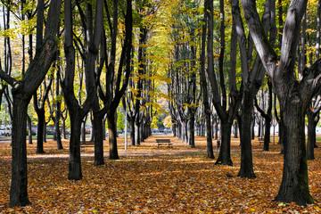 Autumn colours in Parco di Monza Italy
