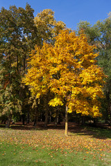 Autumn scene in the Parco di Monza Italy