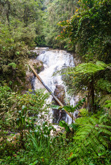 View on waterfall in Cameron highlands