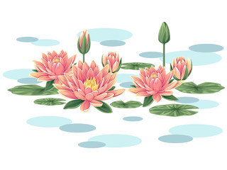 Pink waterlilies vector
