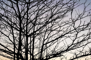Silhouette branch of tree on sky sunset