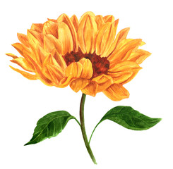 Watercolor drawing of vibrant golden yellow watercolor sunflower