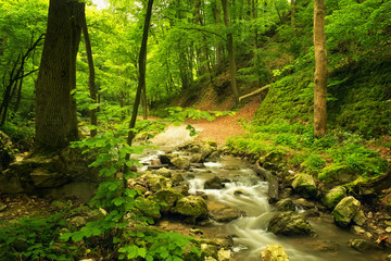 Flowing stream in beautiful forest
