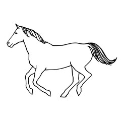 Vector outline illustration of running horse