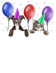 Wall Mural - Party Kitten and Puppy Hanging Over Blank Banner