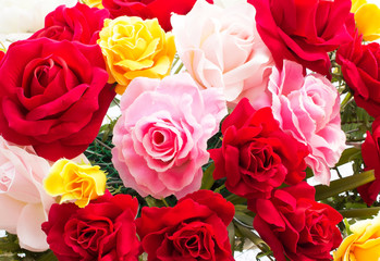 Color Roses Background
