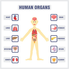 Human Body and Internal Organs