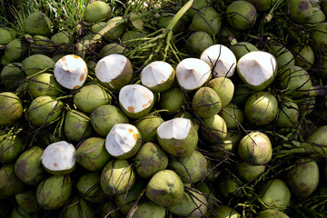 Topical coconuts.