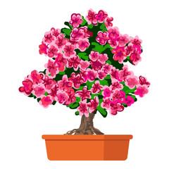 Vector illustration plant in pot, Blooming tree Azalea.